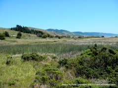 marshes and grasslands