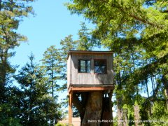 tree house on Limantour