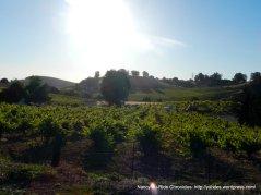 Viano vineyards-Martinez