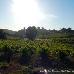 Viano vineyards-Martinez