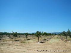 orchards on Halley Rd