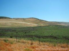 Solano hills