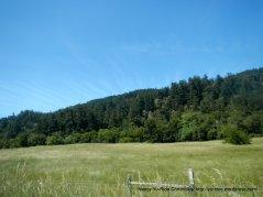 forests and grasslands