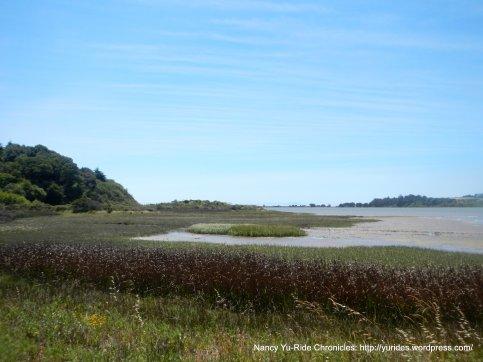 Bolinas wetlands