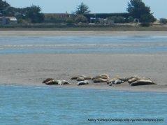 sea lions sunbathing