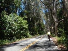 climb up through the eucalyptus