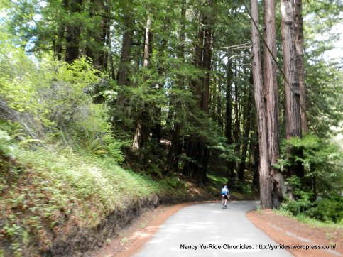 into the redwood forest