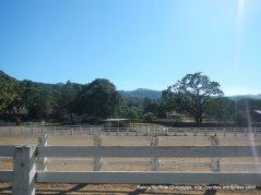 horse arenas