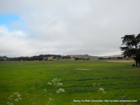 vibrant green grasslands