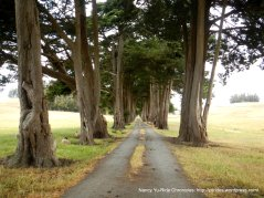 gorgeous tree-lined driveway