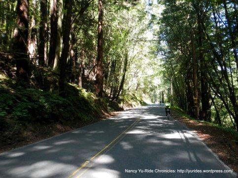 Bohemian Hwy redwoods