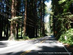CA-116 W redwoods