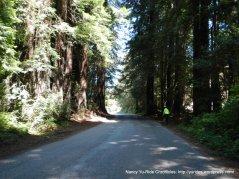 Austin Creek redwoods