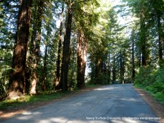 Joy Rd redwoods