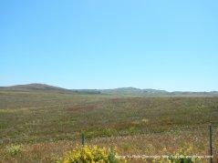 coastal grasslands