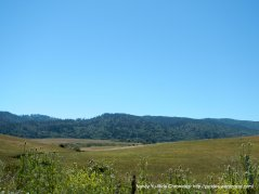 view of Tomales State Park