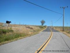to the top-Bolinas Ridge