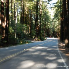 Lucas Valley redwoods