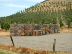 orchard-packing crates