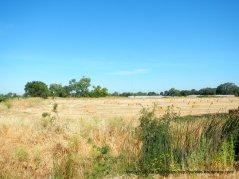 cut hay fields