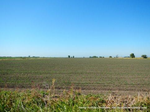 expansive farmlands
