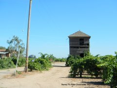 old vineyard tower