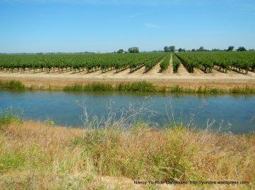 levee road-vineyards
