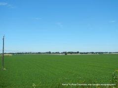 super green fields