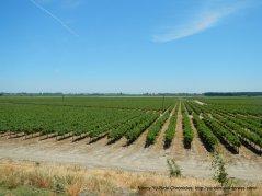 levee road above acres of vineyards