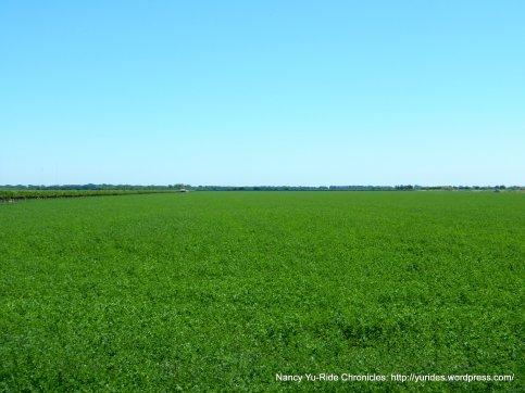 gorgeous green lands
