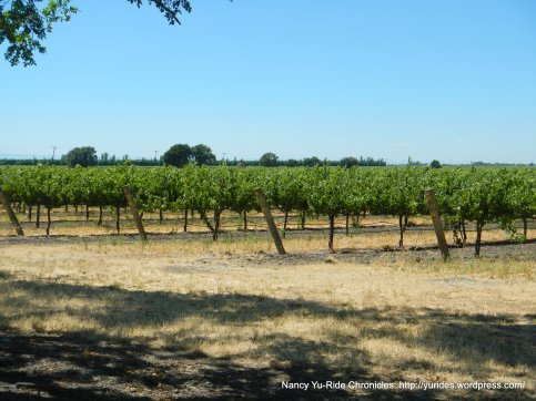 miles of grapevines