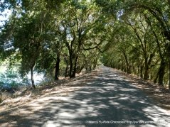 shaded levee road