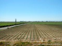 rich farmlands