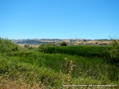 Benicia State Park marshes