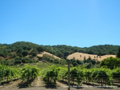 Franklin Canyon vineyards
