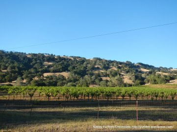 Baldy Mountain vineyards
