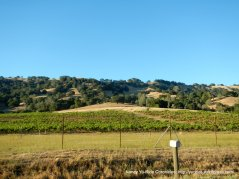 last vineyard atop Chiles Pope Valley