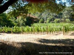 Atlas Peak vineyards