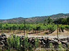 Soda Canyon vineyards