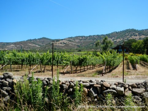 Soda Canyon vineyards