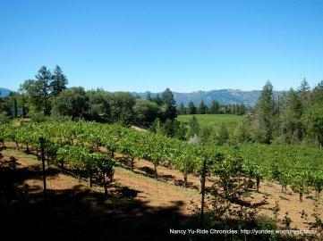 Spring Mtn vineyards