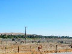 horse paddocks