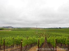 gorgeous vineyard views