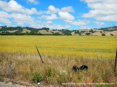 open meadows