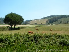 open pastoral lands