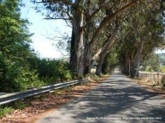 under the eucalyptus trees