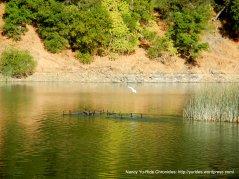 wildlife at lake