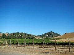 vineyards along CA-128