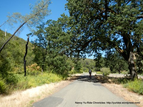huge oaks