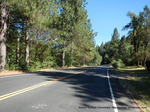 through Whispering Pines